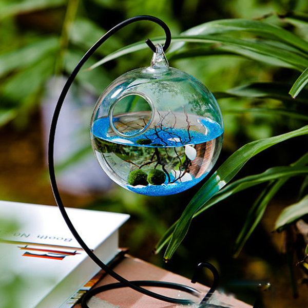 Beautiful Terrariums & Fun Plant Gifts - Apollo Box Blog